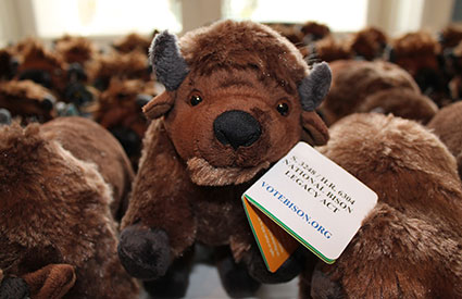 Along with bison burgers and bison-shaped cookies, attendees of the National Bison Day celebration in Washington, DC, each received a small, stuffed bison. (Nov. 2012) <b>&copy;WCS</b>